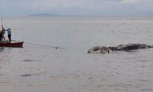 У побережья Филиппин нашли тушу