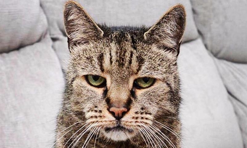 Как 141-летний человек: в Британии умер самый старый кот в мире