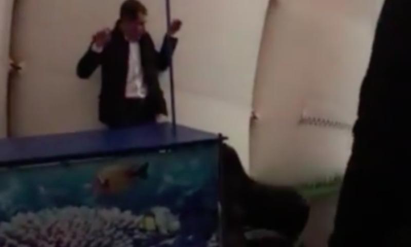 Морской котик задержал незваного ночного гостя дельфинария в Петербурге