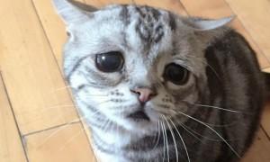 Самый печальный кот на свете найден в Китае