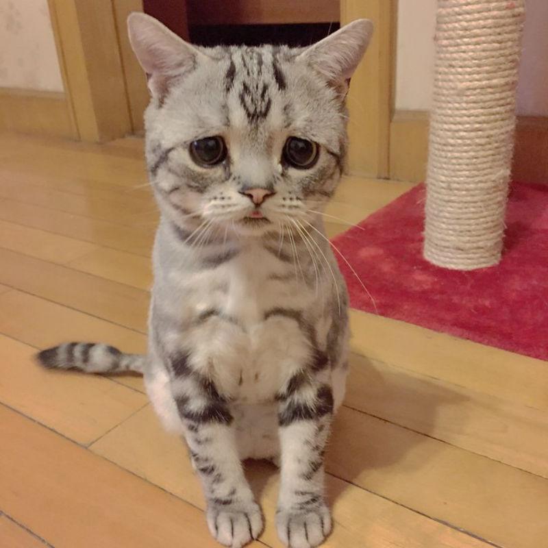 saddest_cat_05