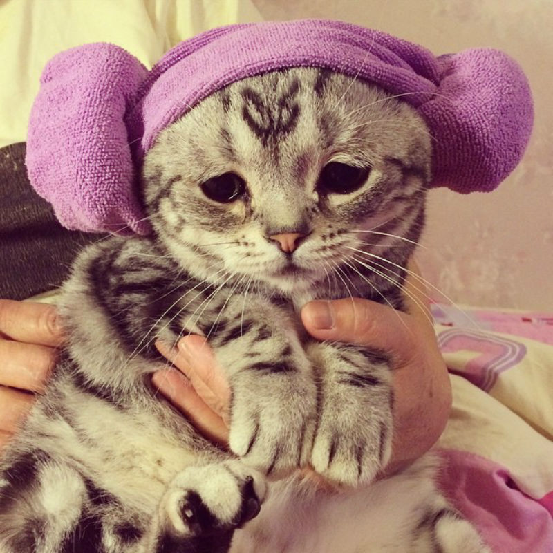 saddest_cat_09
