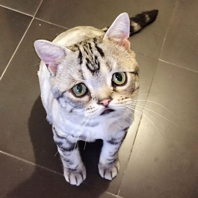 saddest_cat_2