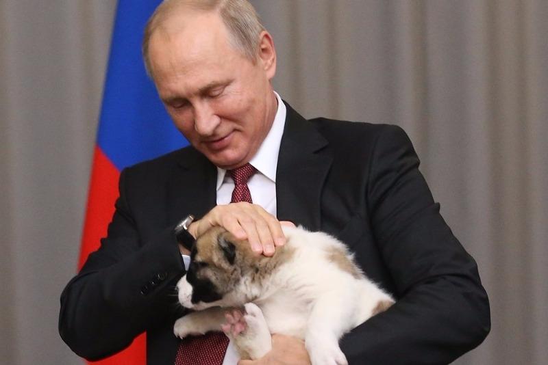 Алабай и Путин1