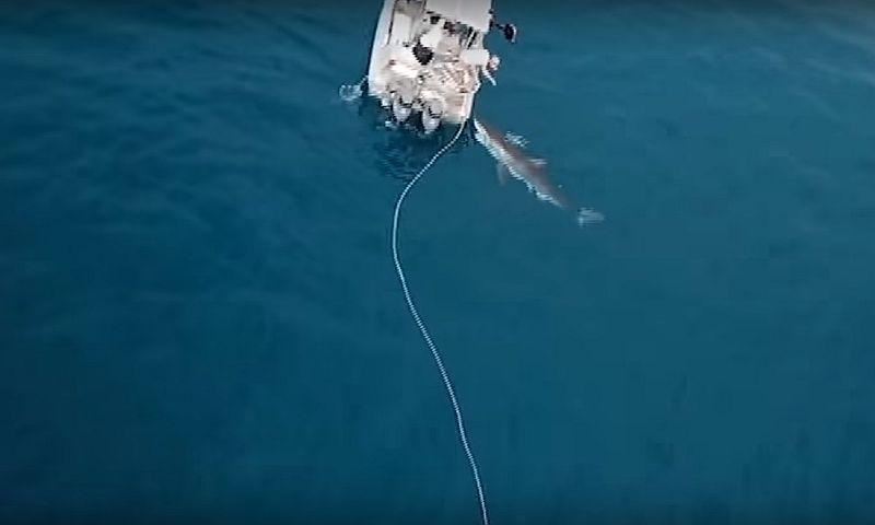 Австралийские рыбаки подверглись атаке пятиметровой белой акулы