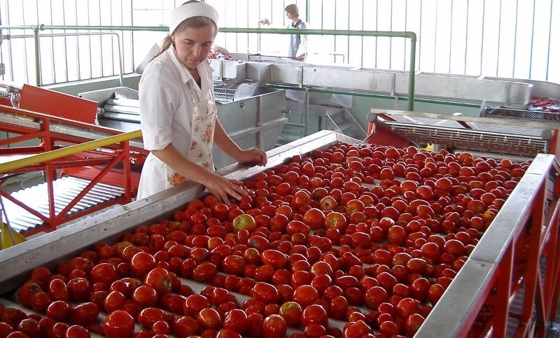 Россельхознадзор едет в Белоруссию считать помидоры, яблоки и грибы