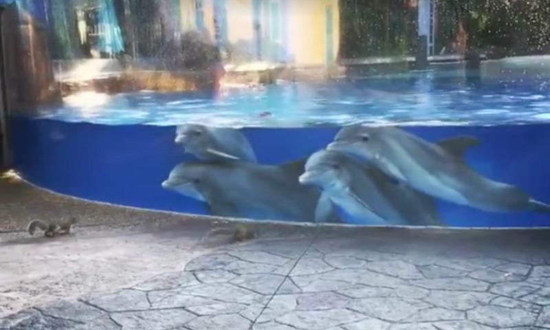 Белки пришли в гости к дельфинам и заворожили их