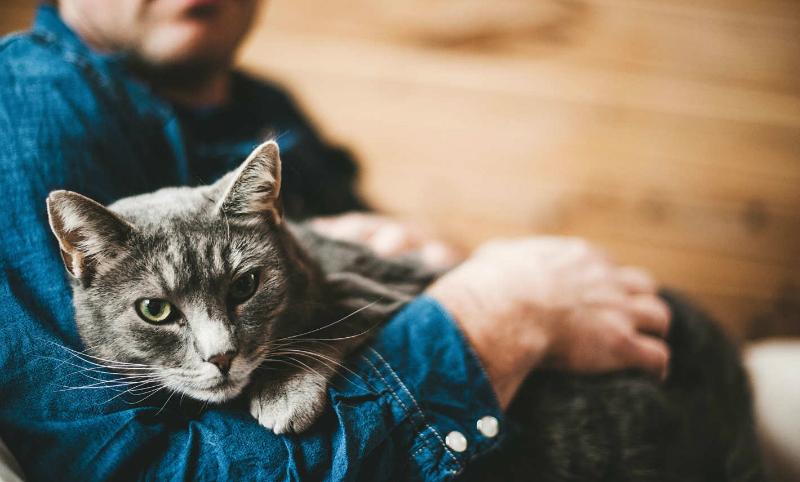 Регистрацию домашних животных хотят сделать платной