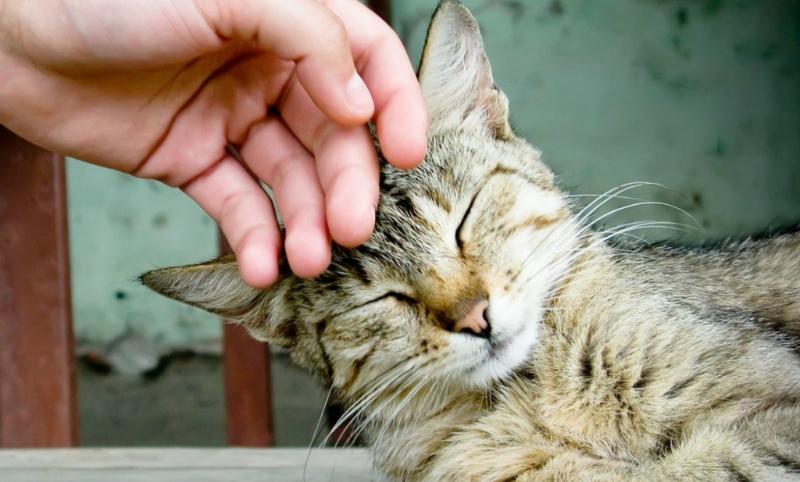 Выдворенный изШвеции житель россии  пытался вернуться встрану засвоим котом