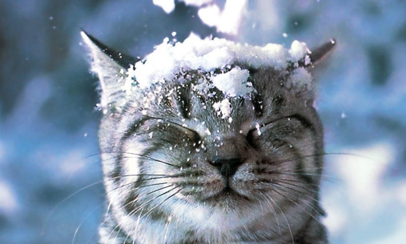Началось: в столичном регионе выпал снег