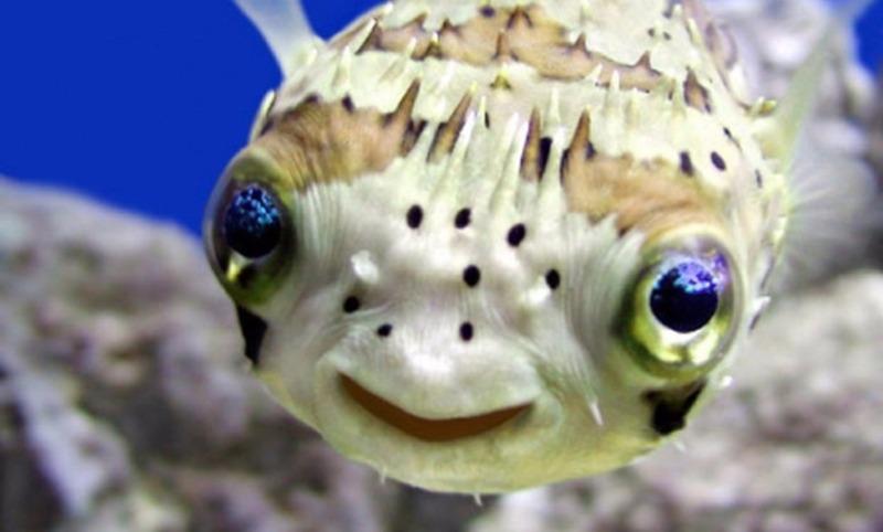 Рыбы тоже могут любить и страдать: сенсационное открытие ученых