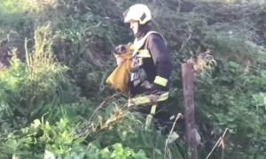 Упавшую в 70-метровый карьер собаку чудом спасли через шесть дней
