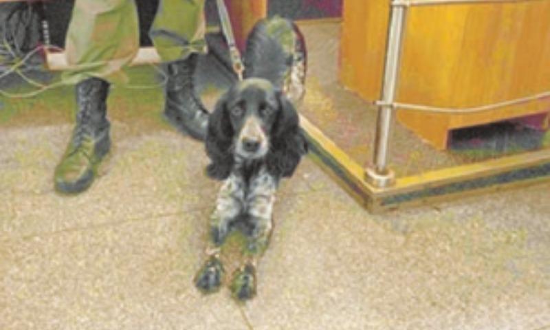 Метрополитен заключил контракт с собакой по кличке Тея на 700 тысяч рублей