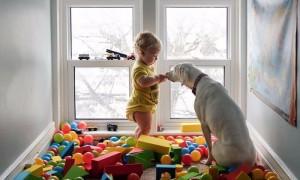 Дружба двухлетнего малыша с собакой из приюта стала хитом Интернета