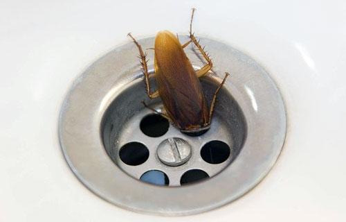 Все, что нужно знать о тараканах
