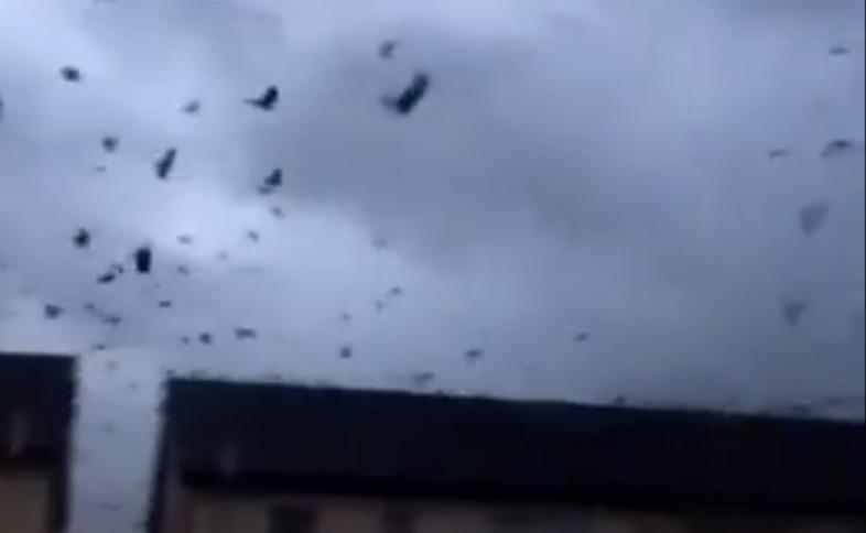Приближающийся ураган вызвал у птиц истерику и обратил в бегство