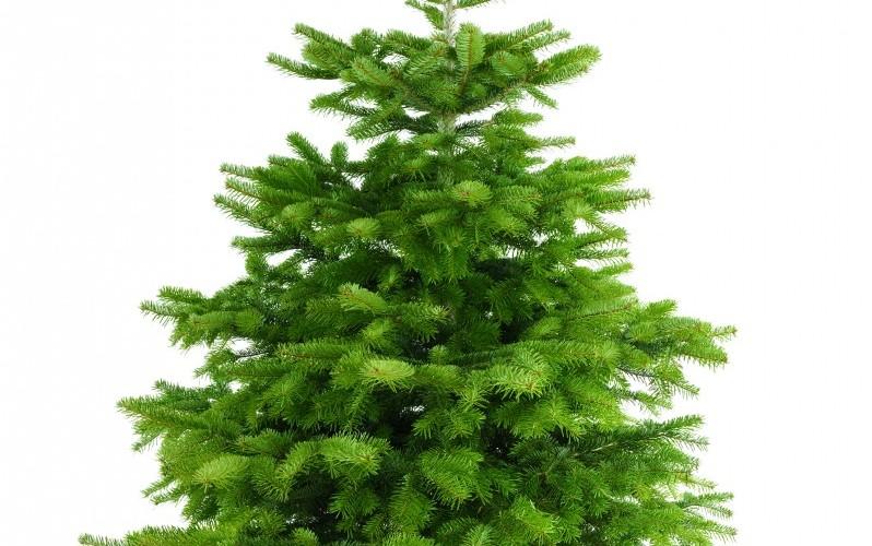 Сохраняем новогоднюю елку свежей