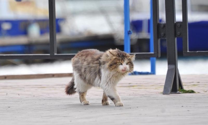 Кот-потеряшка нашел старых хозяев благодаря Таджикистану