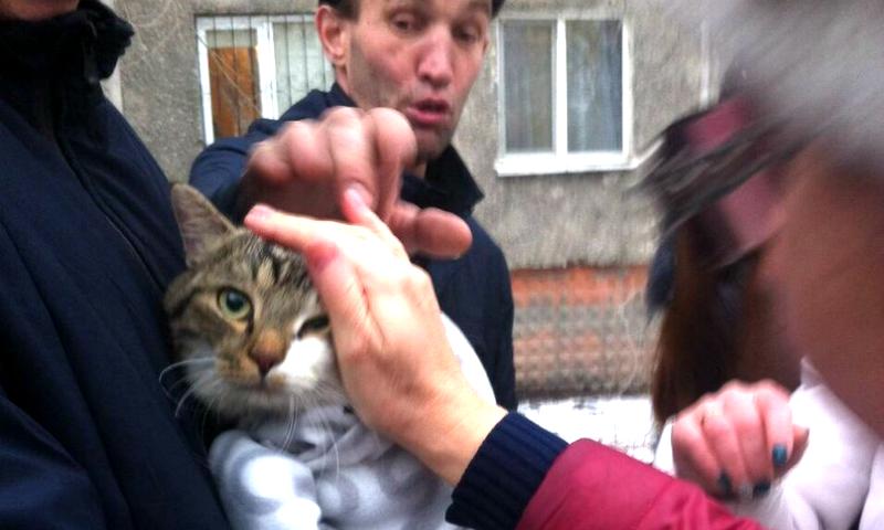 Ради спасения кота жители Омска сбросились кровными деньгами