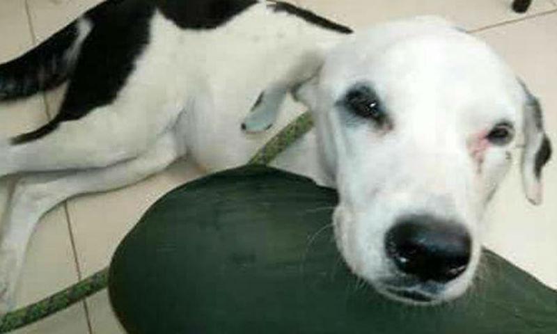 Собака умерла в аэропорту от тоски по хозяину