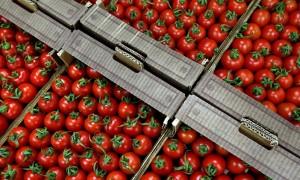 Bandita в России: из Турции приехала первая фура с помидорами