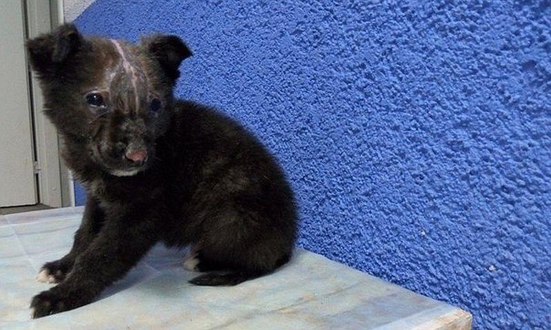 Выживший после поджога щенок Лешка нашел хозяев в Краснодаре