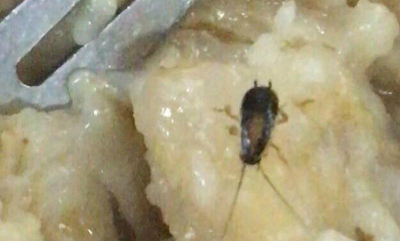 Еду с червями и тараканами сфотографировали в столовой университета ВС на Украине