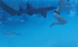Атаку акулы на купальщицу снял на видео ее супруг