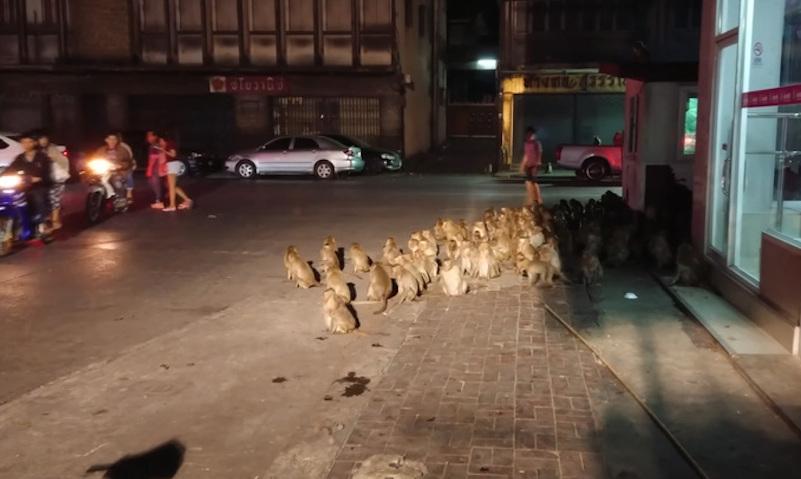 В Таиланде в День отца обезумели сотни обезьян