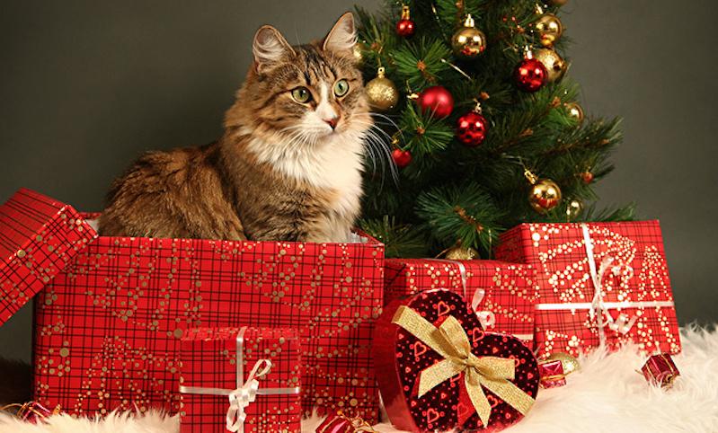 Названы самые дорогие и самые дешевые новогодние подарки