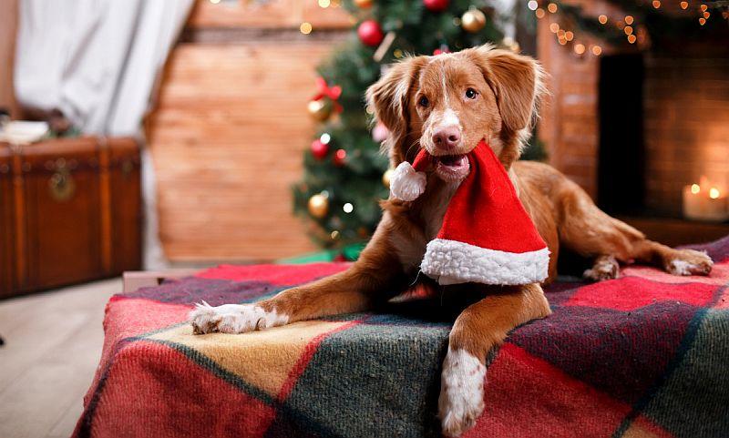 Как правильно встретить год желтой земляной Собаки