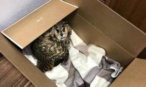Сотрудники МИДа спасли сову и дали ей