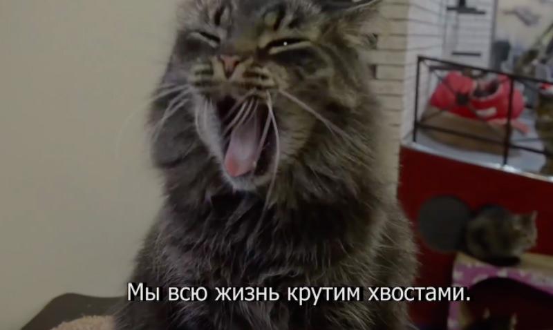 Котики ради курсантов приняли участие в флешмобе Satisfaction