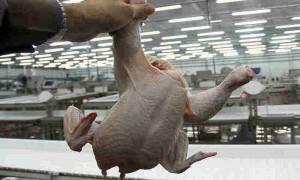 Российскую курятину признали опасной для жизни: антибиотики и бактерии