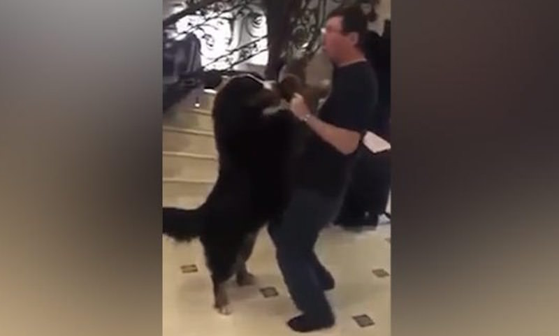 Генпрокурора Украины уличили в романтических отношениях с собакой