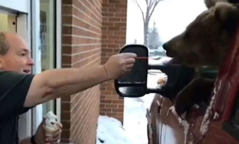 Медведицу привезли в ресторан выбрать десерт ко дню рождения