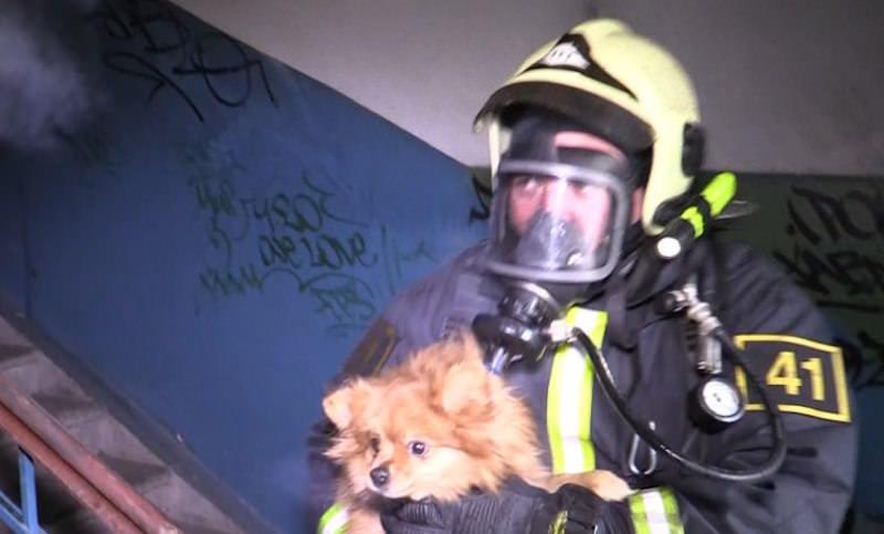 Кота и собаку спасли пожарные из горящего дома в Мурманске