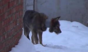 Парень спас собаку, которая целый год проходила с обрезком трубы на шее