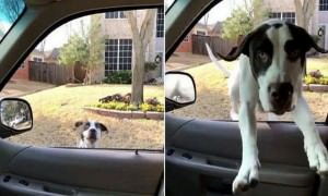 А как вы садитесь в машину?