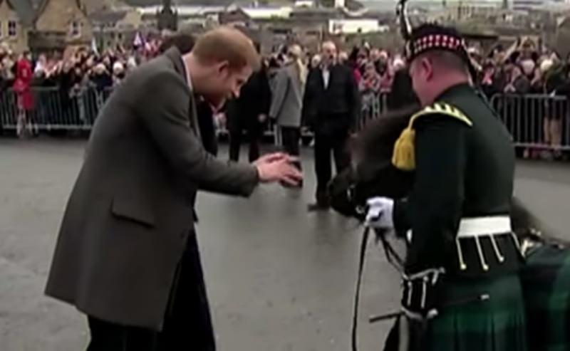 Наглый пони покусал принца Гарри на публике
