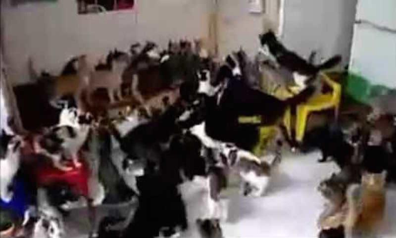 Женщина наводнила квартиру котами