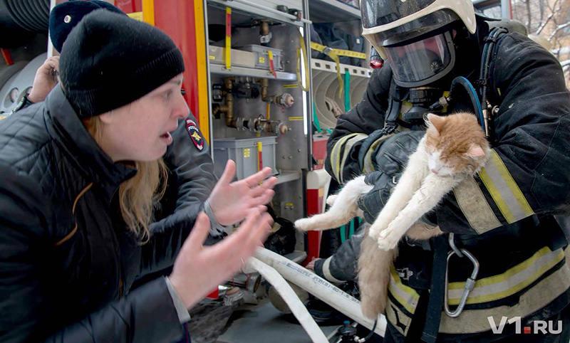 Кошку с того света  вытащили волгоградские  пожарные