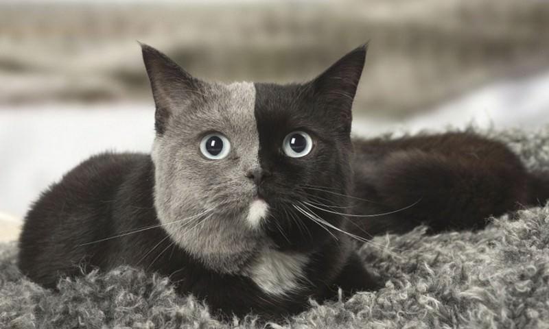 Кот превращает любые фото в чёрно-белые