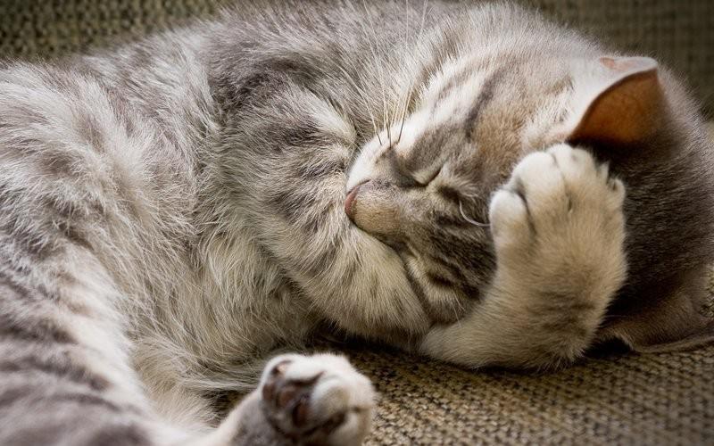 Всем спать!