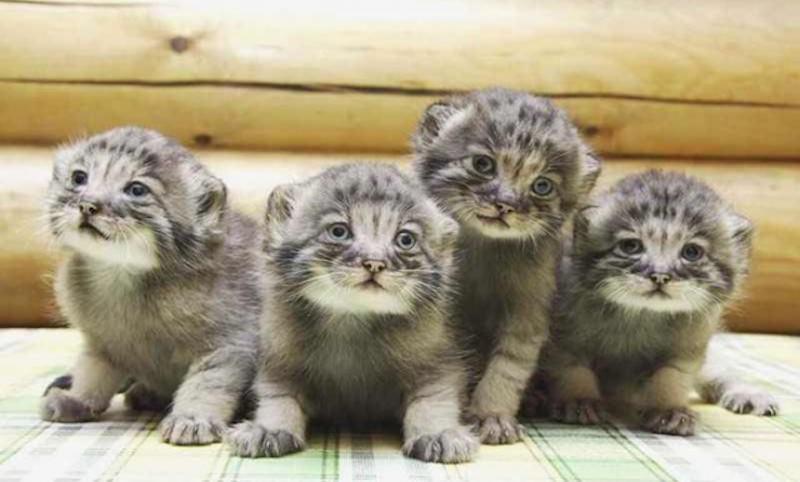 Фермер из Зауралья подобрал слепых котят, которые оказались дорогим