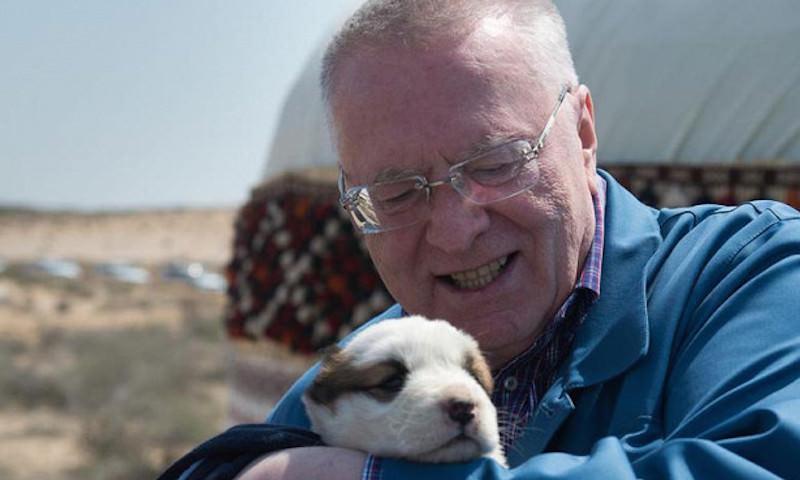 Жириновский предложил усыплять бродячих собак