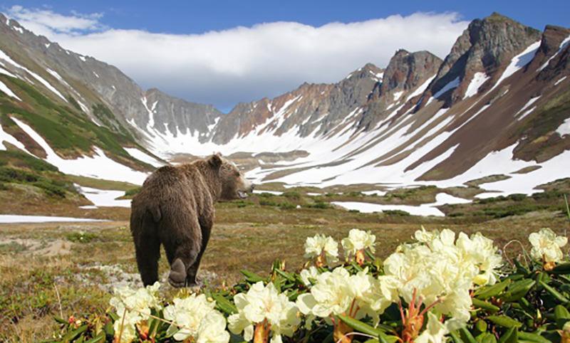 Календарь: 3 марта - Всемирный день дикой природы