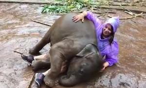 Слоненок повел себя с увесистой женщиной как кошка