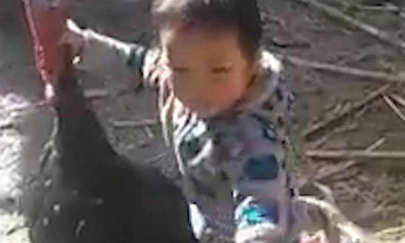 В Кыргызстане мальчик разнял дерущихся индюков