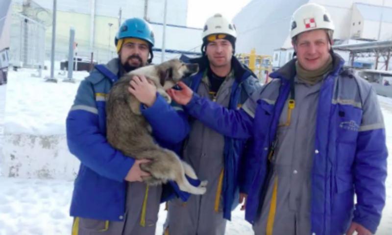 Ради спасения собаки рабочие залезли на Чернобыльский саркофаг